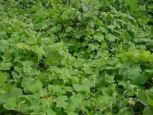 2001-9-13-arechiuri
