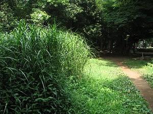 2007-7-8-komichi-2